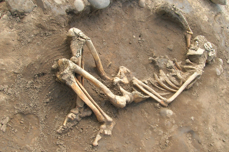 Image: Skeleton of a Roman man in a shallow grave, Heslington East archaeological dig