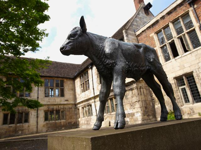Image: 'Friesian Calf' by Sally Arnup (acquired 1996), in the main courtyard of The King's Manor