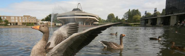 Goose in front of Central Hall© Georgi Mabee