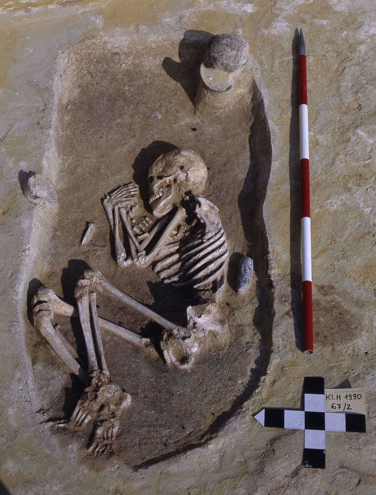 Image of an excavated neolithic skeleton