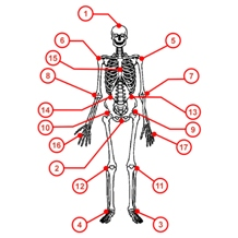 Skeleton with chemistry sampling points