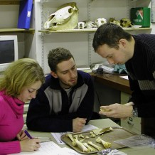 Zooarchaeology practicals