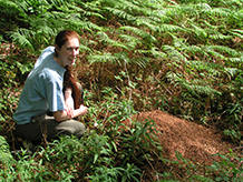 WoodAnts Fieldwork