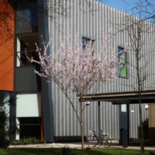 Detail view of F-block with tree in blossom in front.
