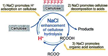 Mechanistic understanding of salt-assisted autocatalytic hydrolysis of cellulose
