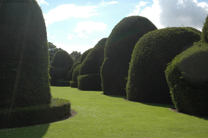 Image: Topiary on Campus