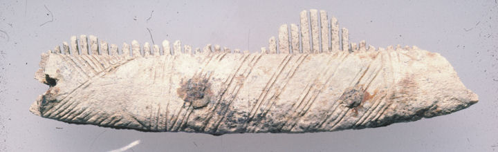 Bone comb found during excavations at Repton