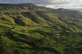 Credit: Dr Rob Marchant - Gamo Highlands of Ethiopia