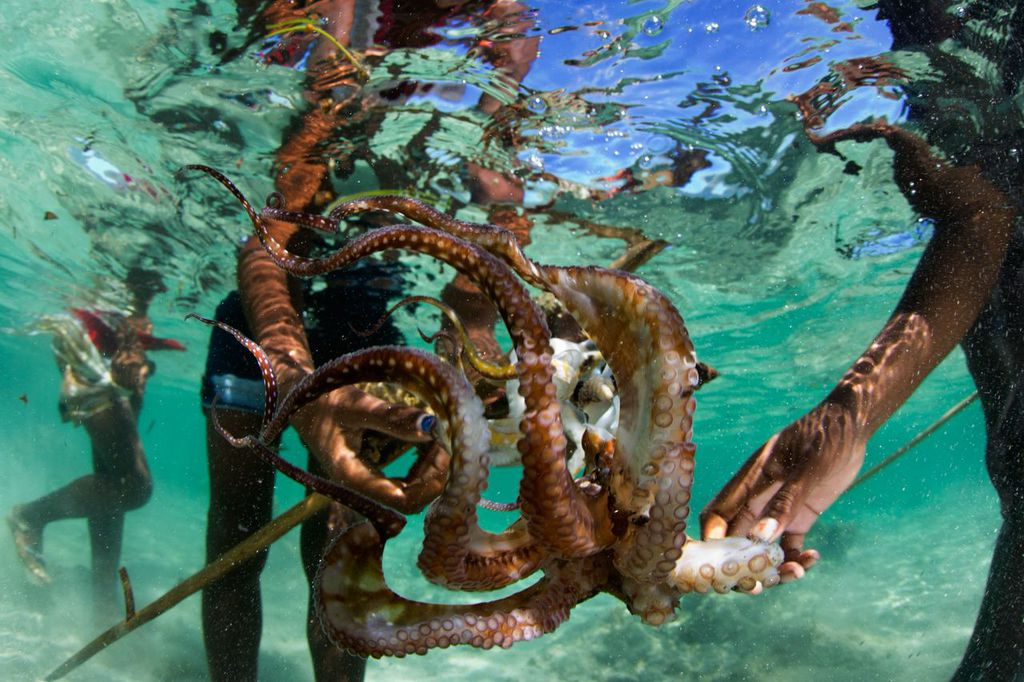 marine bio diversity Marine biodiversity biodiversity is an all-inclusive term to describe the total variation among living organisms of our planet in its simplest form, biodiversity or biological diversity.