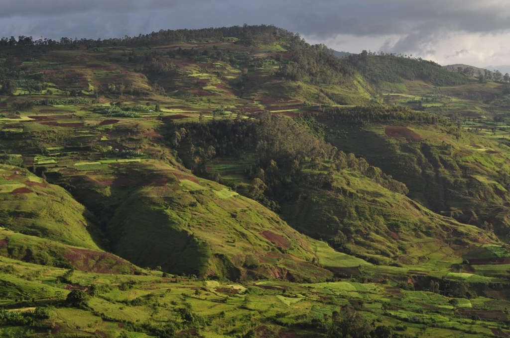 Image: Forest clearence in Gamo Highlands, Ethiopia