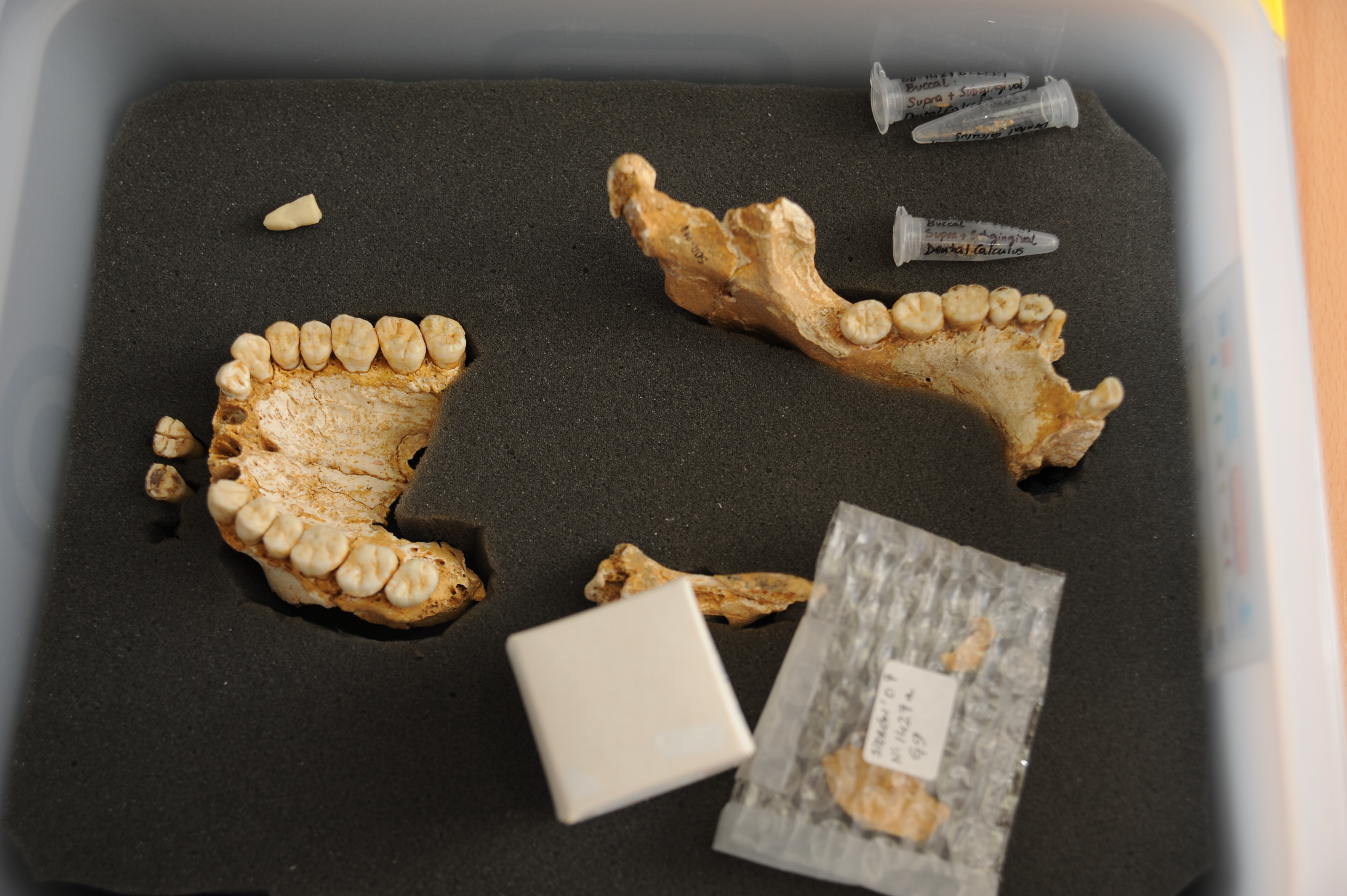 Image: Neanderthal remains found in El Sidrón Cave. Credit: CSIC Comunicación