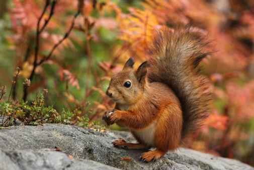 Image result for squirrels