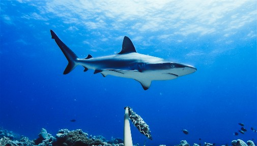 Protected Areas Critical To Conserving Marine Life In International Waters News And Events The University Of York