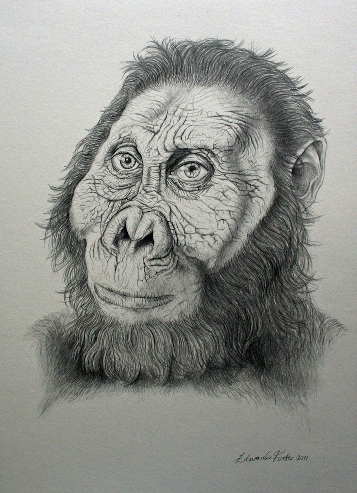 based on a reconstruction by John Gurche,  was drawn by UK artist Edward Foster