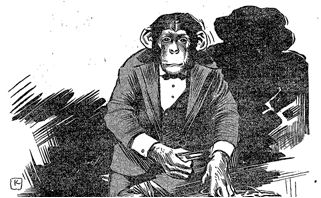sociology of monkeys Black spider monkeys have long, glossy black hair covering their entire bodies except for their faces their long hair immediately distinguishes them from other.