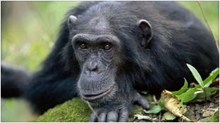 sociology of monkeys The hundredth monkey effect is a hypothetical  the account is that unidentified scientists were conducting a study of macaque monkeys on the  (sociology.