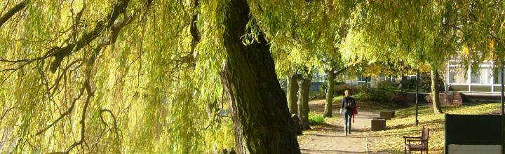 Trees, such as the willow, make the University grounds an attractive place to explore