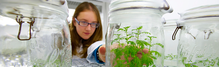 A student in a lab coat doing research, reaching for plants in a jar.