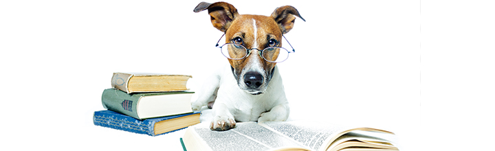 Image of a studious dog and books to accompany news item with advice on study and revision techniques.