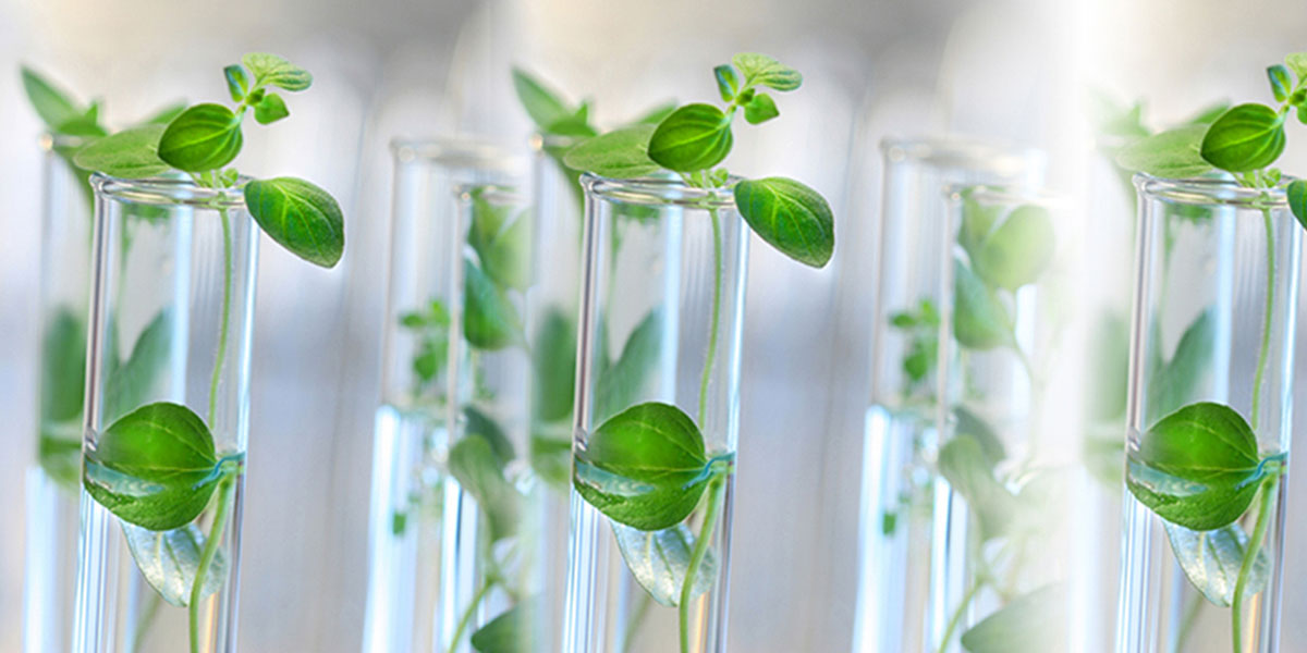 Green Chemistry And Sustainable Industrial Technology Msc
