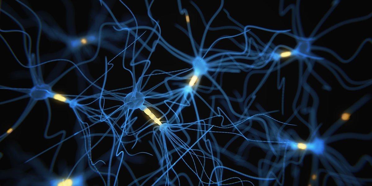 Cognitive Neuroscience (MSc) - Postgraduate taught, University of York