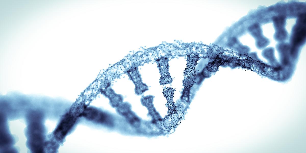 Genetics (MBiol) - Undergraduate, University of York