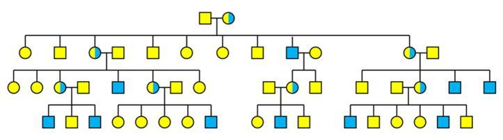 Pedigree Tree