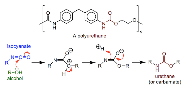 the structure and formation of a polyisoprene