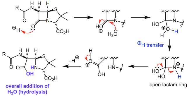 Reaction of water with the beta-lactam ring in a hydrolysis reaction
