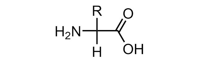 amine acid