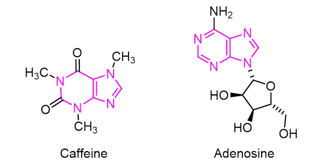 Adenosine and caffeine