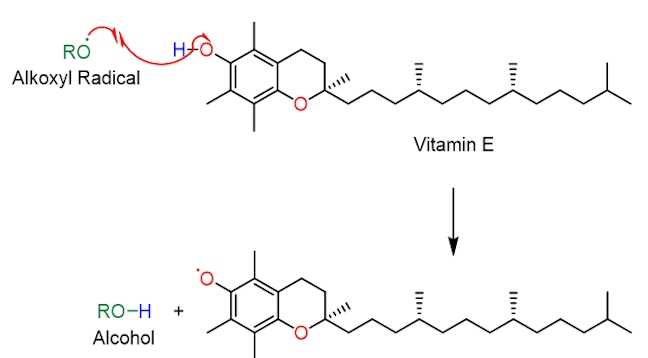 Propagation of vitamin E