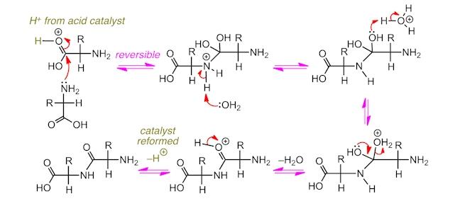maltodextrin hydrolysis