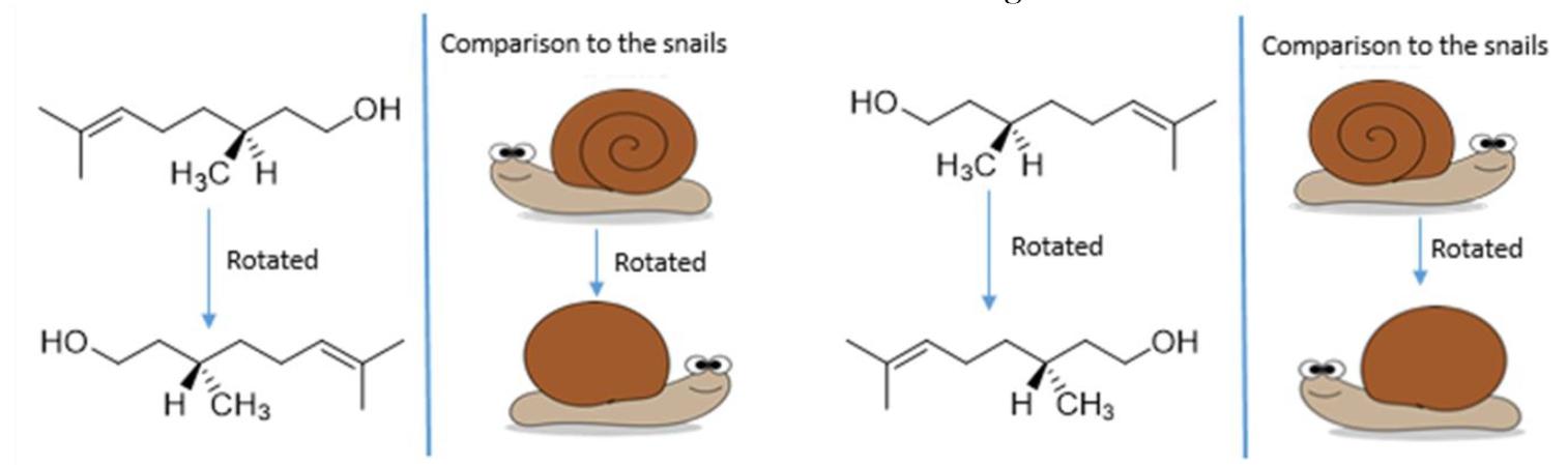Final snails